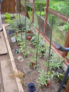 plantation des tomates dans la serre quoi de neuf au potager. Black Bedroom Furniture Sets. Home Design Ideas