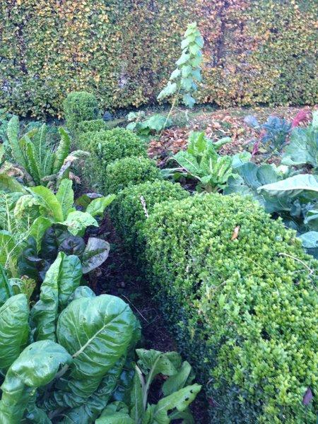 Le buis au jardin autant de charme que de formes quoi for Au jardin de ma grand mere