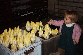 R coltes en cave quoi de neuf au potager - Culture des endives au jardin ...