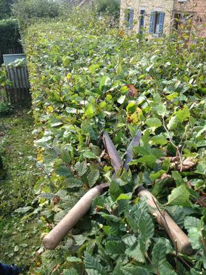 Le journal du jardin octobre 2013 quoi de neuf au for Cout haie jardin