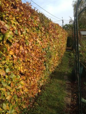 Le journal du jardin quoi de neuf au potager for Cout haie jardin