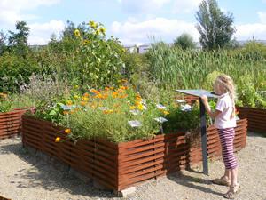 plantes médicinales jardin