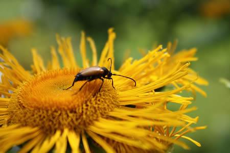 petits insectes au jardin quoi de neuf au potager. Black Bedroom Furniture Sets. Home Design Ideas