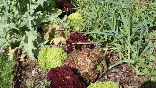 Permaculture quoi de neuf au potager - Utilisation du marc de cafe au jardin ...