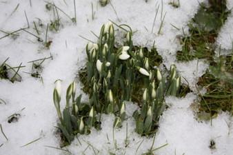 Et on papote aussi en mars... - Page 6 Perce-neige-2009