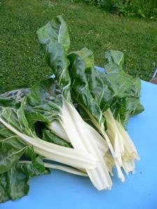 R coltes de l gumes en mai quoi de neuf au potager - Bettes au jardin ...