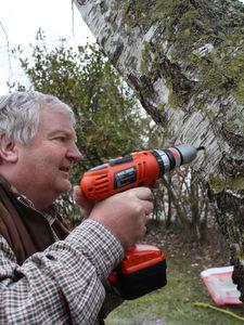 Récolte de sève de bouleau - Quoi de neuf au potager