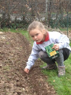 les plantations et semis spontan s en permaculture
