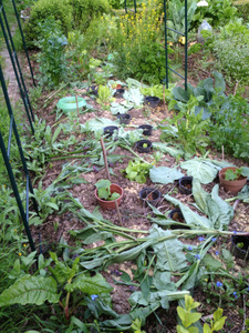 Le paillage en permaculture for Exemple potager permaculture