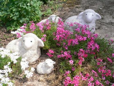 J\u0027ai oublié le nom de ces fleurs de rocaille !